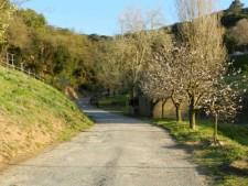 Cami entrada a la casa